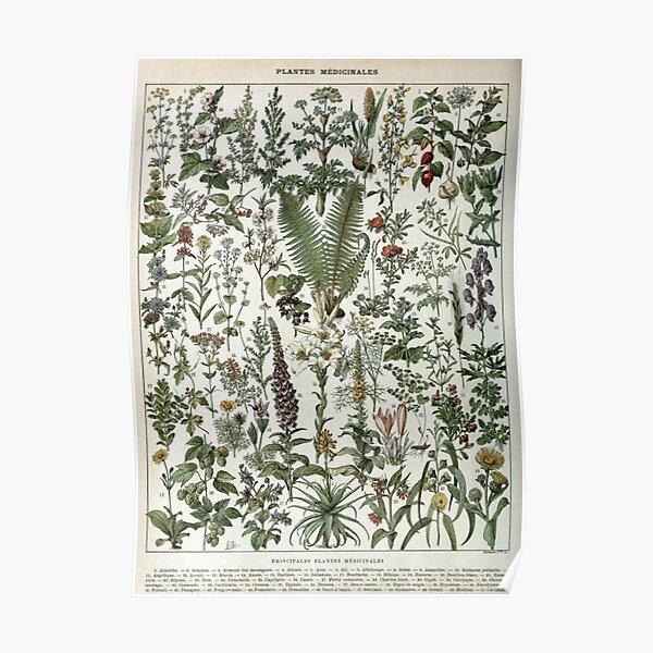 vintage plants poster Poster