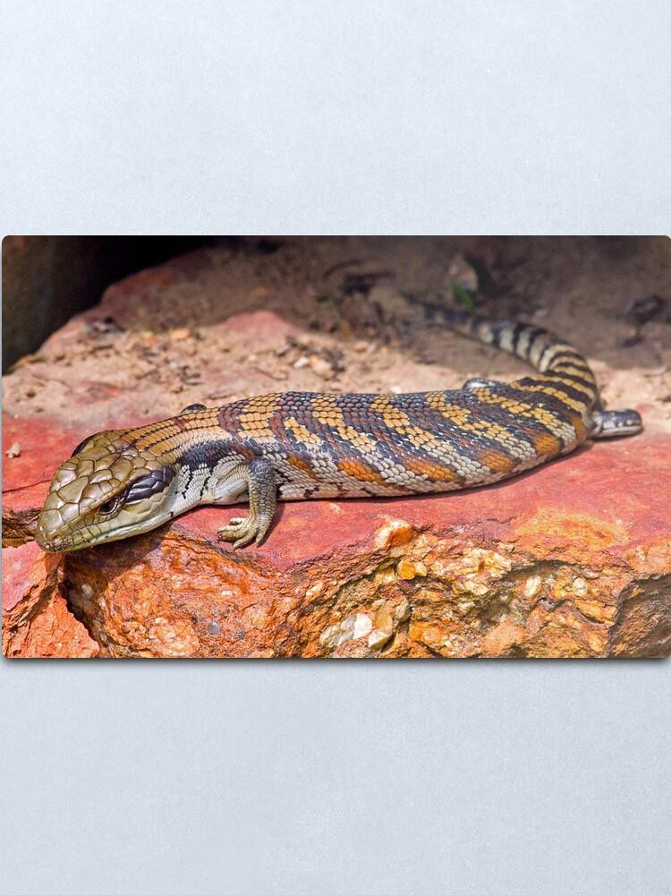 Alternate view of Baby Bluetongue Lizard Metal Print