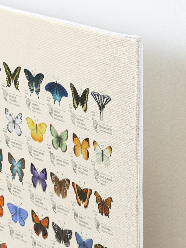 Alternate view of Butterflies of North America Mounted Print