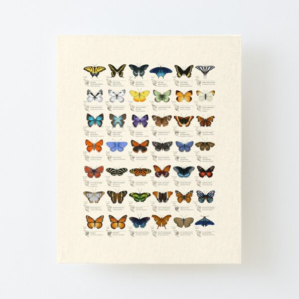 Butterflies of North America Canvas Mounted Print