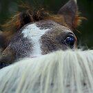 Peek a boo  by SylanPhotos