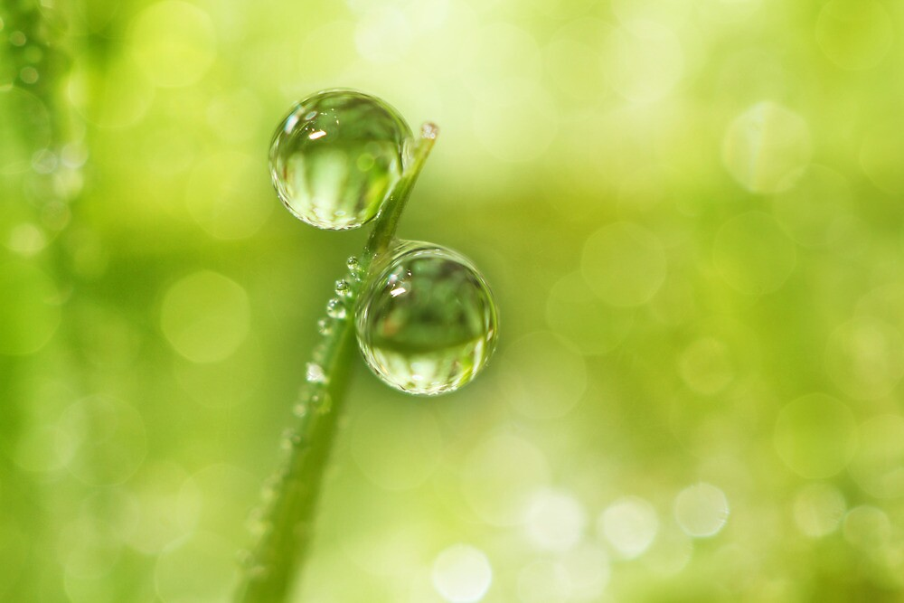 Dew Drop Green by Sharon Johnstone