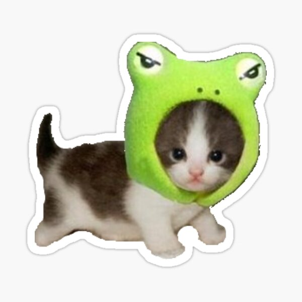 baby cat with frog hat  Sticker