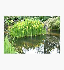 Daffodil Reflection at Fitzroy Gardens Photographic Print