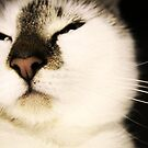 close up cat 2 by hmmmbates