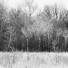 Trees Along A Meadow by MLabuda