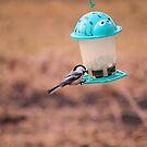 bird by Cheryl Dunning