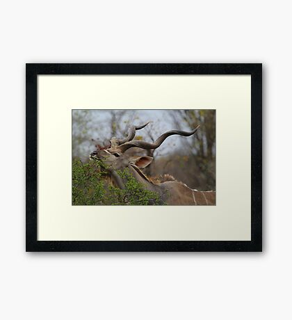 Browsing Framed Print
