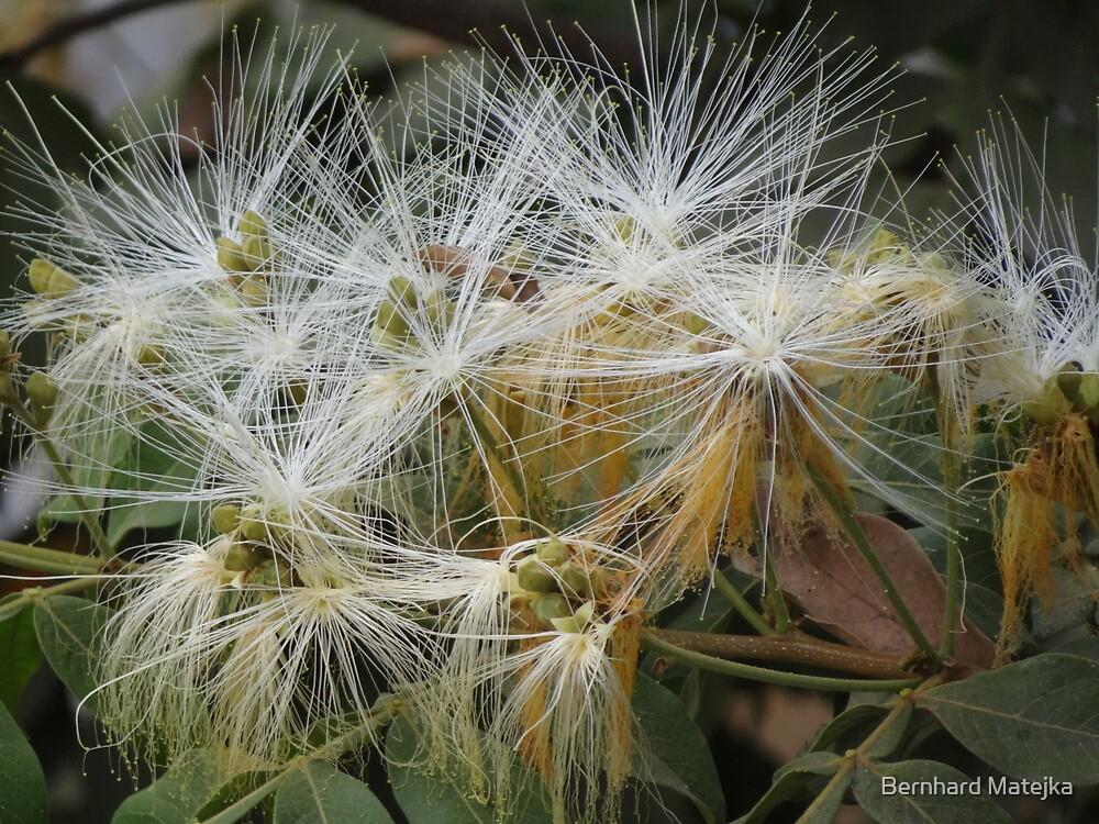 Jungle Blossoms - Flores De LA Selva by Bernhard Matejka