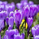 Spring Has Sprung by Lynne Morris