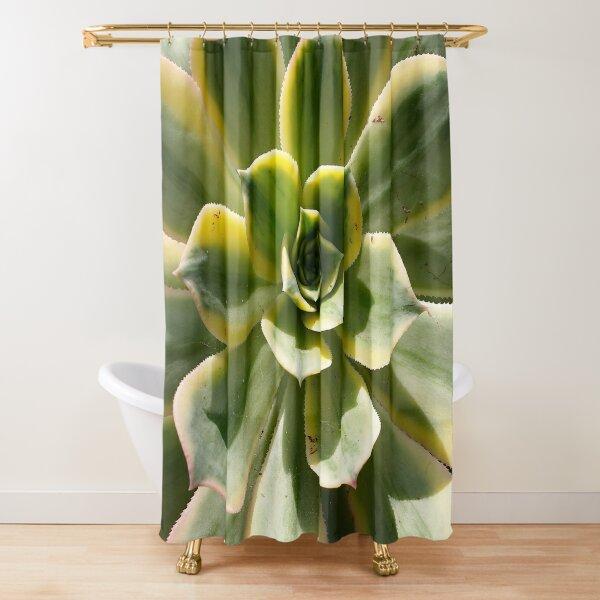 Echeveria In The Sun  Shower Curtain