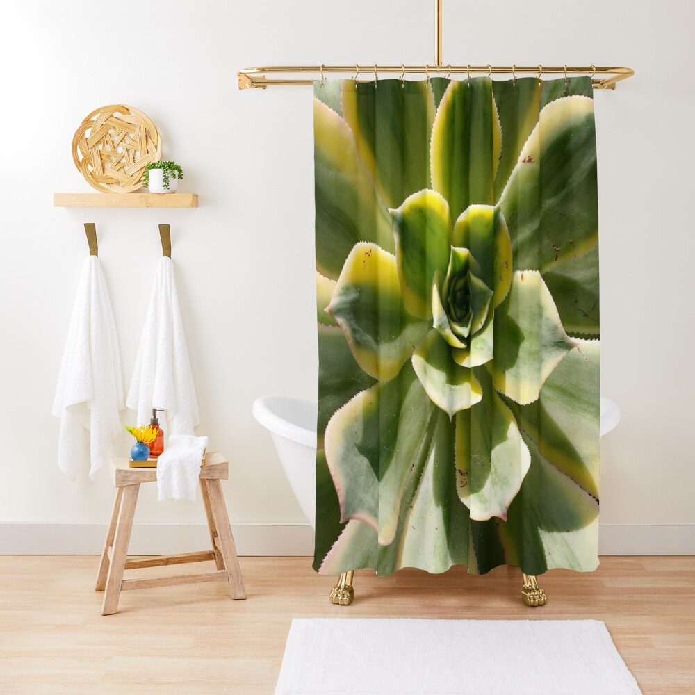 Echeveria In The Sun  Shower Curtain