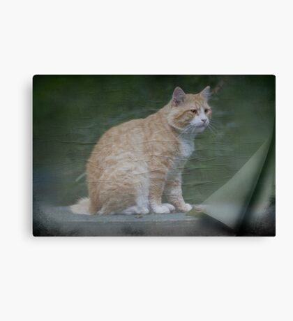 Marvelous Max The Marmalade Cat Canvas Print