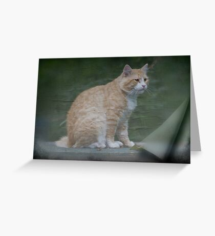Marvelous Max The Marmalade Cat Greeting Card