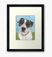 Pitbull Dog Portrait Canine Animal Cathy Peek Framed Print