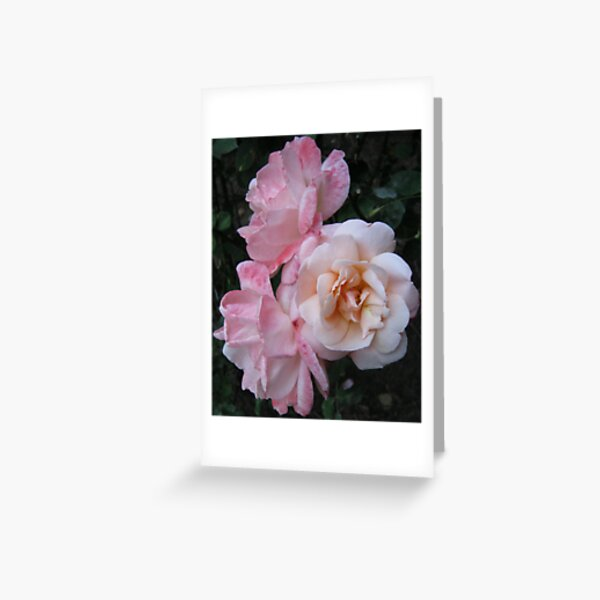 Roses From The Huntington Library Greeting Card
