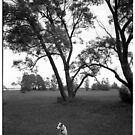 Dog in the park by Lionel Douglas