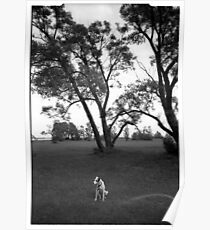 Dog in the park Poster