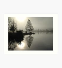 Cypress in the Fog  Art Print