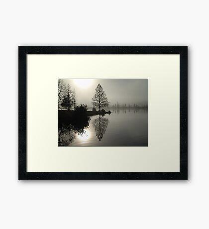 Cypress in the Fog  Framed Print