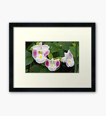 Rasberry Blosoom Framed Print