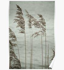 Soft Reeds Poster