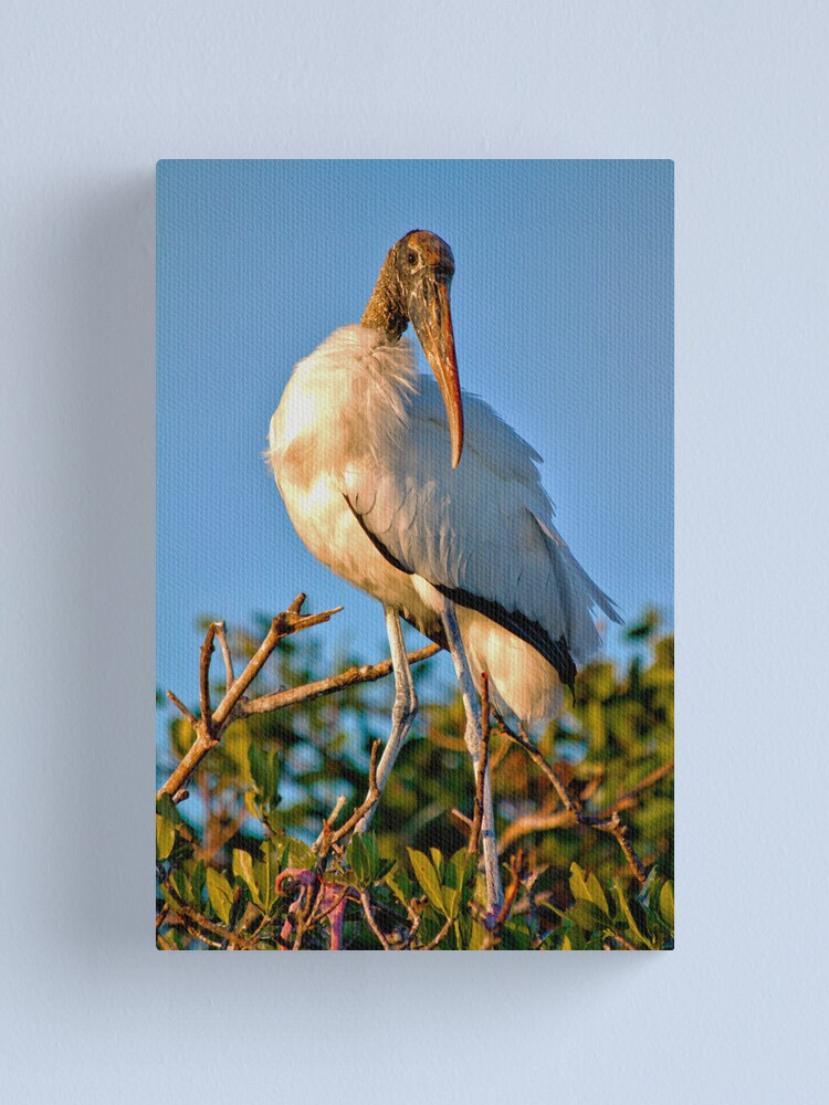 Alternate view of Adult Wood Stork Canvas Print