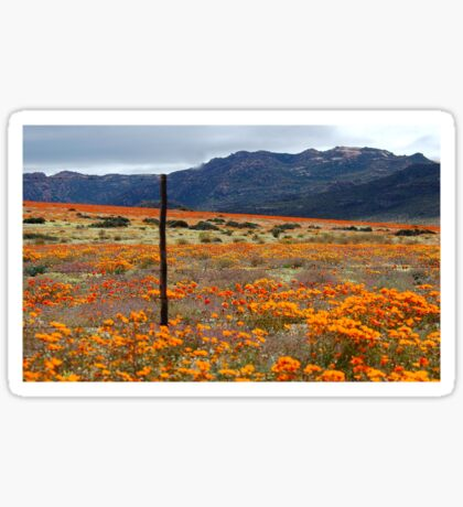 WILDFLOWERS OF  NAMAKWA, WESTERN CAPE, SOUTH  Sticker