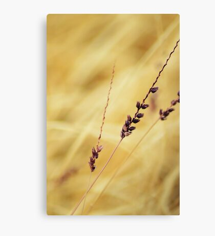 Beautiful Weed Canvas Print