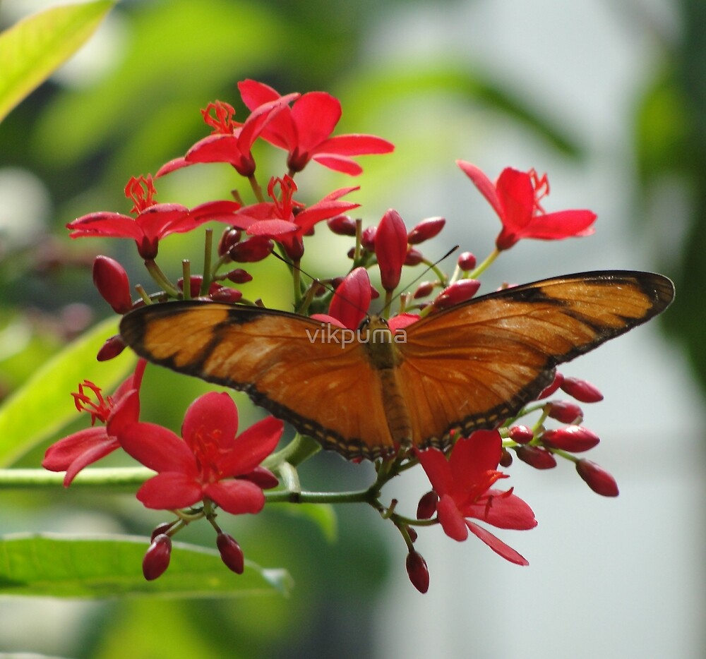 Beautiful Butterfly with flowers by vikpuma
