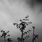 Silhouette Tree by sodaniechea