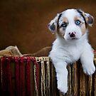 I'm a pup! by Jennifer S.