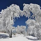 """"""" Winters Caress """" by CanyonWind"""
