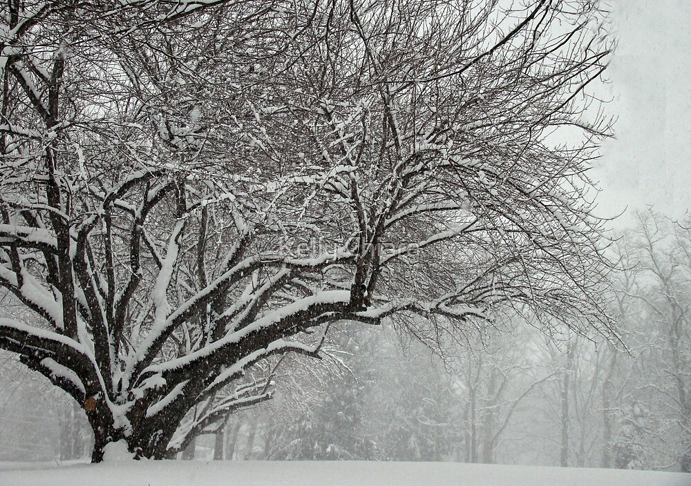 Winter's Wild Play by Kelly Chiara
