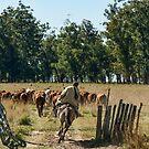 Gaucho Herding on Horse by photograham