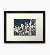 Swimming in the warmth of the sun Framed Print