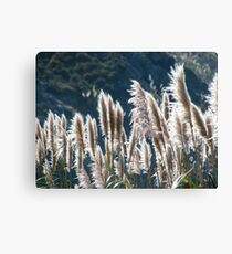 Swimming in the warmth of the sun Canvas Print