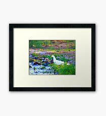 Water and sunshine Framed Print