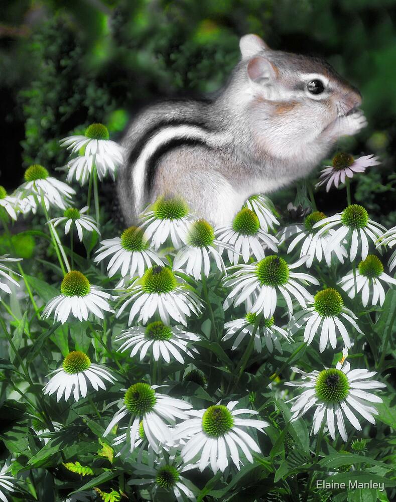 Flower Baby  by Elaine  Manley