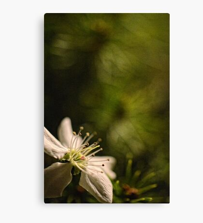 Flower at night 1  Canvas Print