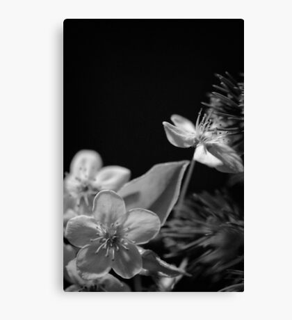 Flower at night 3 Canvas Print