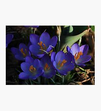 Sign of spring Photographic Print