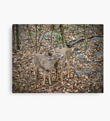 You're the Best Brother Ever Canvas Print