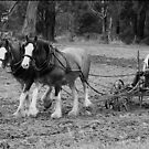 Two Working Horses - Nyora, Gippsland by Bev Pascoe