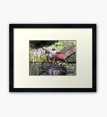 Nesting Roseate Spoonbills Framed Print