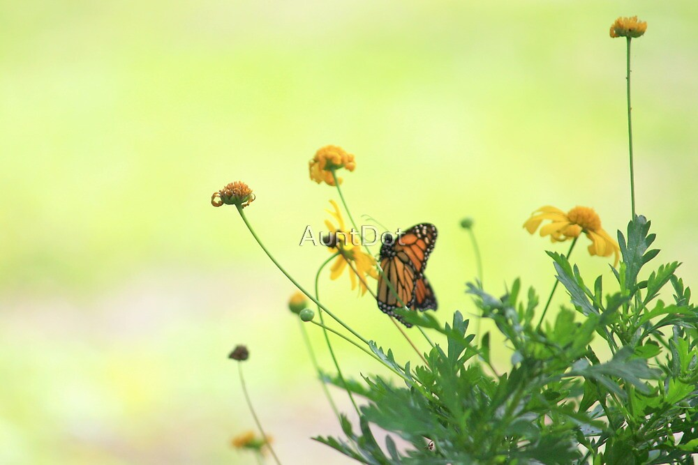 Monarch In the Spring by AuntDot