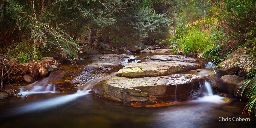 New Town Rivulet #16, Tasmania by Chris Cobern