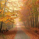 Forest in Autumn by ienemien