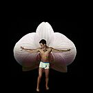 On Orchid Wings by Michael Taggart