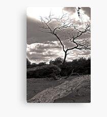 Lightning Tree Canvas Print